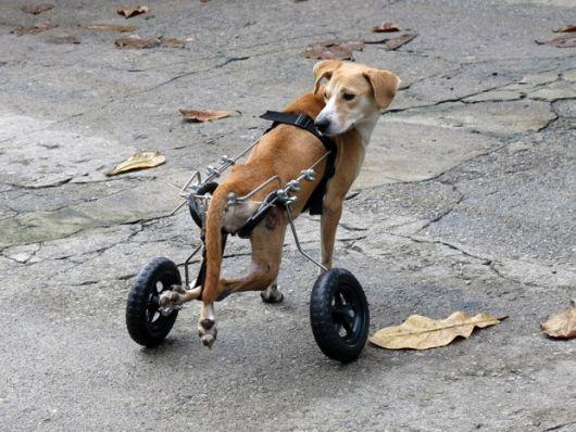 cadeira-de-rodas-para-cachorro-13