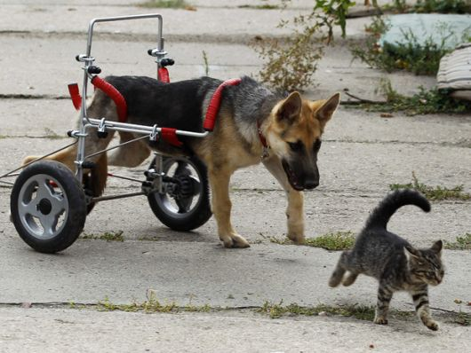cadeira-de-rodas-para-cachorro-14