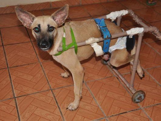 cadeira-de-rodas-para-cachorro-15