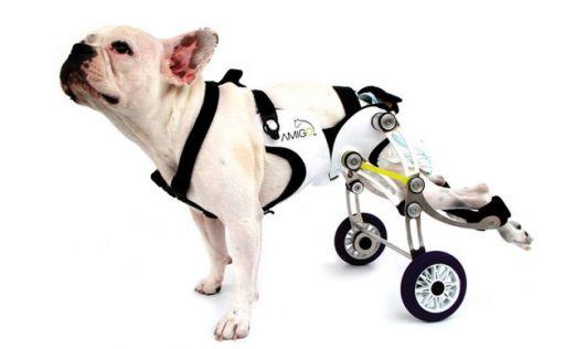 cadeira-de-rodas-para-cachorro-2