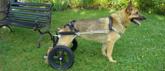 cadeira-de-rodas-para-cachorro-3
