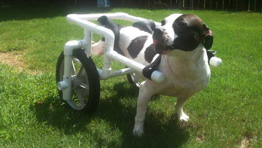 cadeira-de-rodas-para-cachorro-4