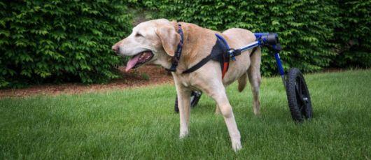 cadeira-de-rodas-para-cachorro-destaque
