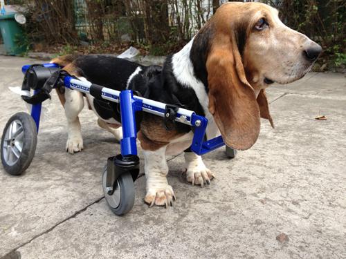 cadeira-de-rodas-para-cachorro-ideias
