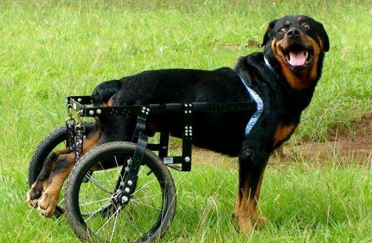 cadeira-de-rodas-para-cachorro-modelos