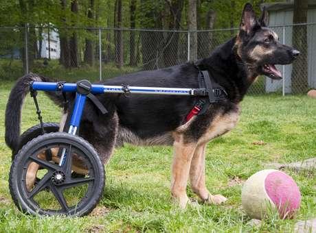 cadeira-de-rodas-para-cachorro-moderno