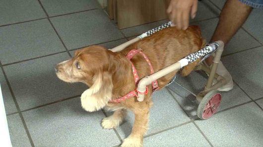 cadeira-de-rodas-para-cachorro