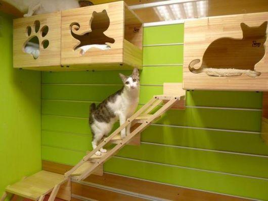 casas-para-gatos-destaque