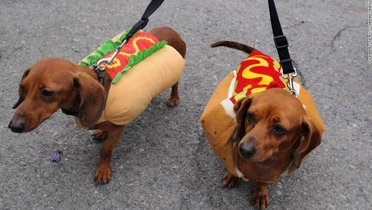 fantasias-para-cachorro-hot-dog-destaque