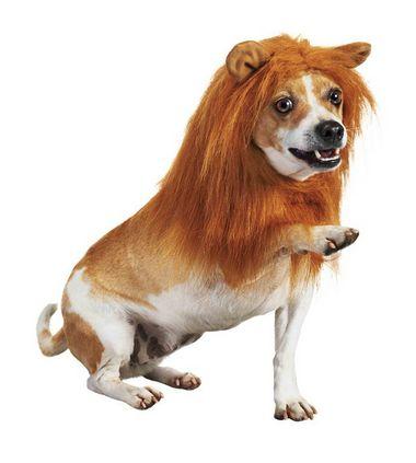 fantasias-para-cachorro-leao-3