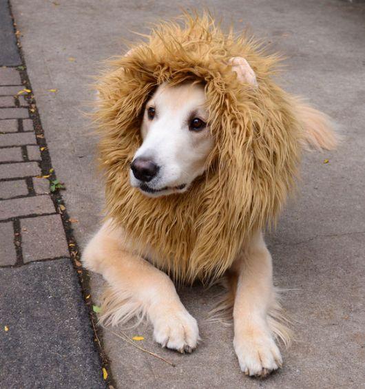 fantasias-para-cachorro-leao