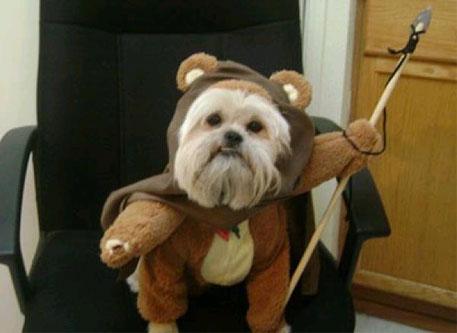 fantasias-para-cachorro-star-wars-2