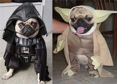 fantasias-para-cachorro-star-wars-ideias