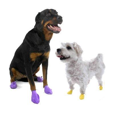 sapatos-para-cachorro-de-bexiga-1