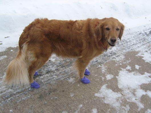 sapatos-para-cachorro-de-bexiga-2