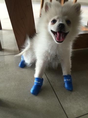 sapatos-para-cachorro-de-silicone