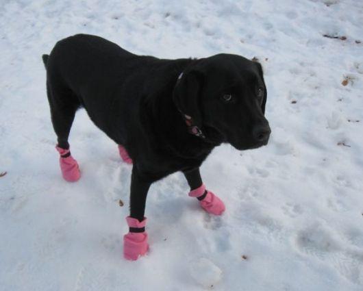sapatos-para-cachorro-na-neve-1