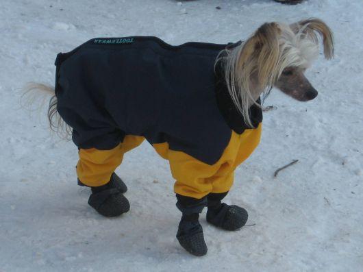 sapatos-para-cachorro-na-neve-2
