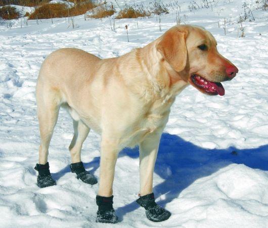 sapatos-para-cachorro-na-neve-3