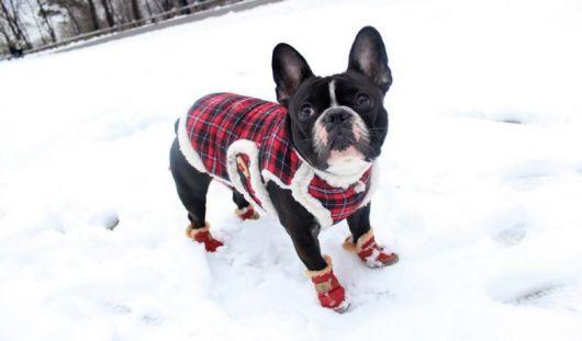 sapatos-para-cachorro-na-neve