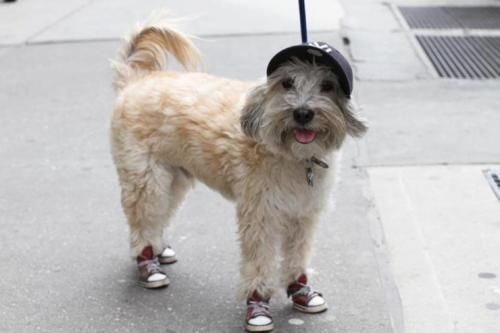 sapatos-para-cachorro-tenis-10