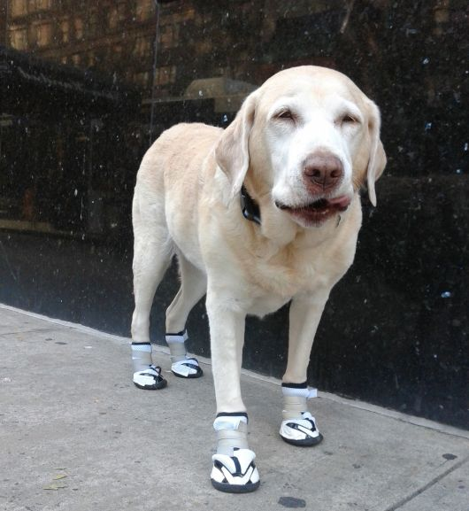 sapatos-para-cachorro-tenis-2