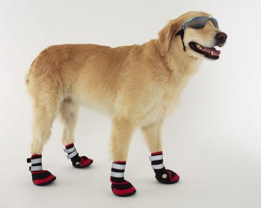 sapatos-para-cachorro-tenis-3