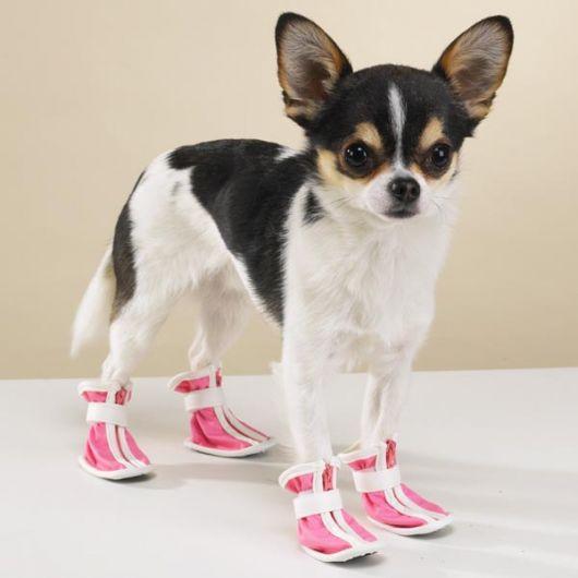 sapatos-para-cachorro-tenis-6