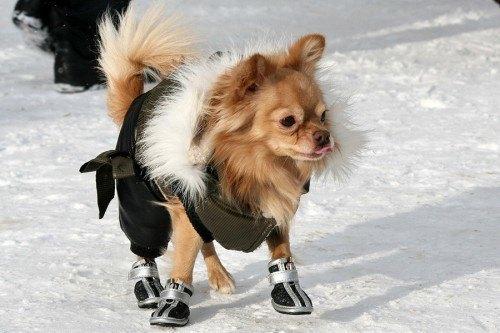 sapatos-para-cachorro-tenis-8