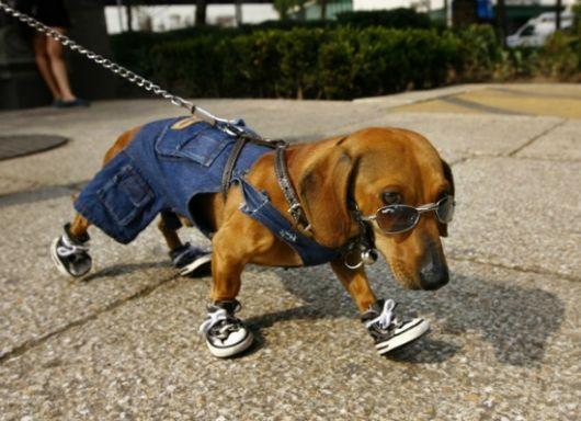 sapatos-para-cachorro-tenis