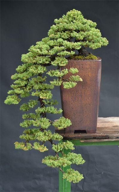 planta natural cascata