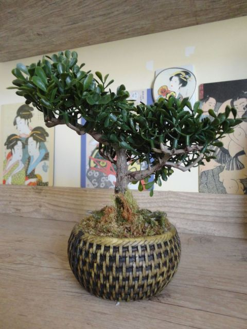 mini árvore