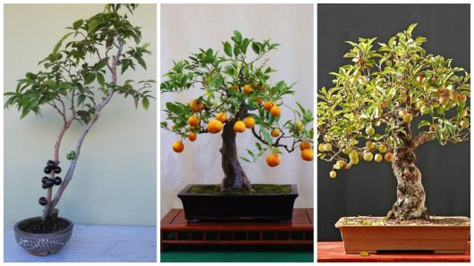 espécies frutíferas
