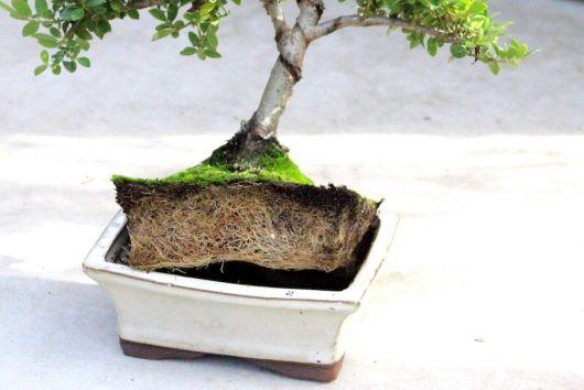 replante
