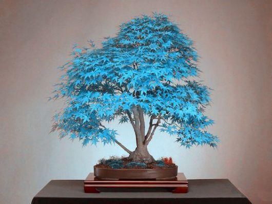 árvore de folhas azuis