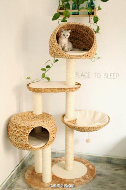 casinha gato