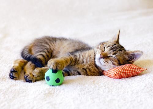 bolinha gatos