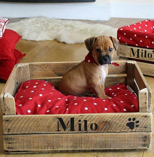 cama de cachorro reaproveitamento