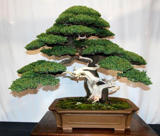 Como cuidar de um bonsai conhe a dicas importantes e 20 for Como cultivar bonsais