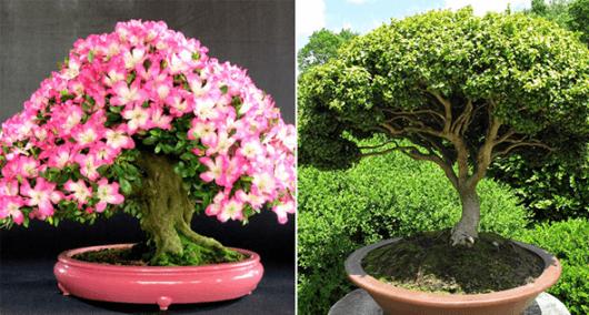 Como cuidar de um bonsai conhe a dicas importantes e 20 - Como cuidar bonsais ...