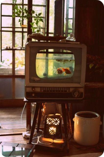 Aquário pequeno em televisão antiga