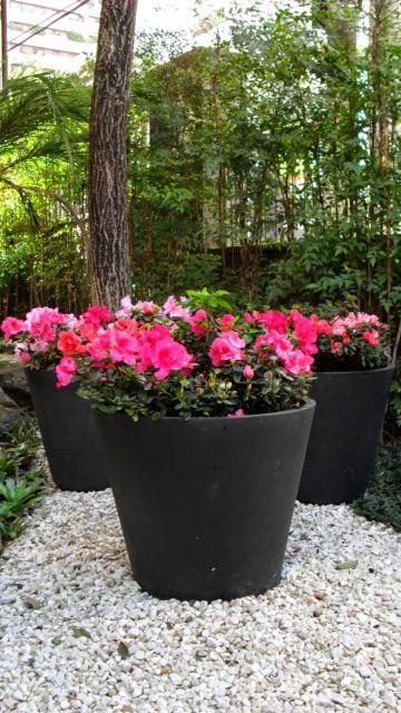 Vaso pequeno de Azaleia com flores rosas