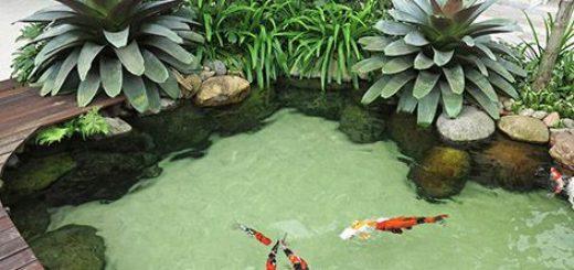 Lago artificial com peixes vermelho