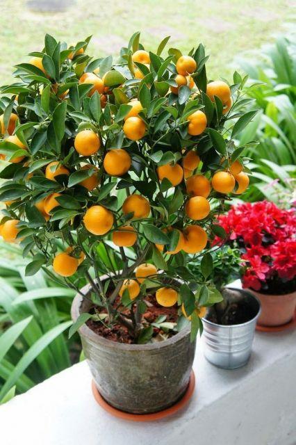 vaso com laranja