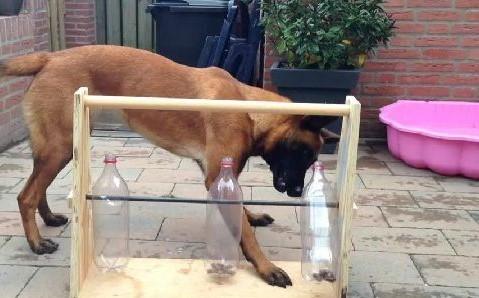 brinquedo para cachorros sozinho