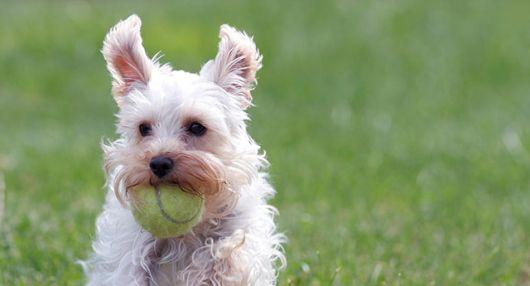 bolinha para cachorro pequeno