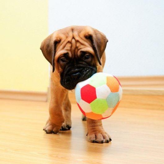 bola para cachorro filhote