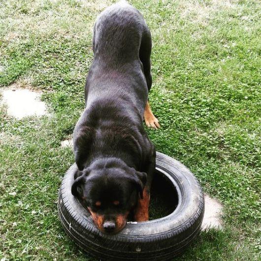 brinquedo com pneu