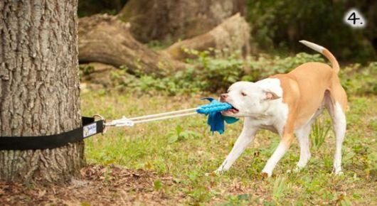 brinquedo cachorro destruidor