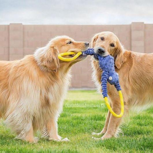 brinquedo para 2 cachorros